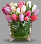 Tulip ATL Dreams