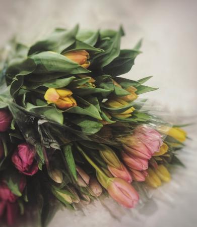 Tulip Bouquet Cut Flowers