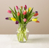 Tulip Breeze SOLD OUT