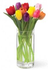 Tulip Festival N4-4316