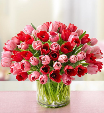 tulip heaven  spring