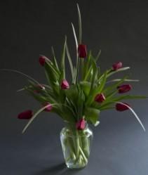 Tulip Lovers Delight Best Seller