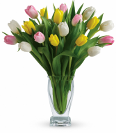 Tulip Treasure H1421B