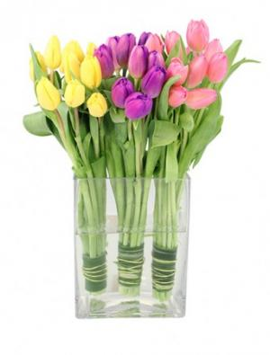 Tulip Trio Arrangement in Newport, ME | Blooming Barn Florist Gifts & Home Decor