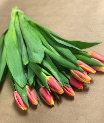 Tulips, 10 Stem Bunch Wrapped
