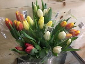 Tulips  in Osoyoos, BC | POLKA DOT DOOR