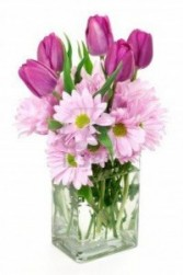 Tulips And Daisies Spring Arrangement