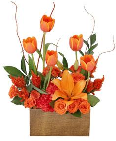 Tulips on Fire Floral Arrangement