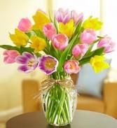Tulips Rainbow Premium Tulips