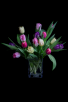 Weekly Special: Tulips' Spring