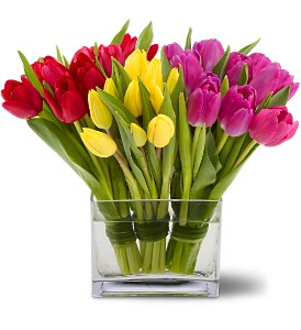 Tulips Together Spring Floral