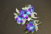 Turquoise Dendrobium Orchid $50.00 Matching Boutonniere $10.00