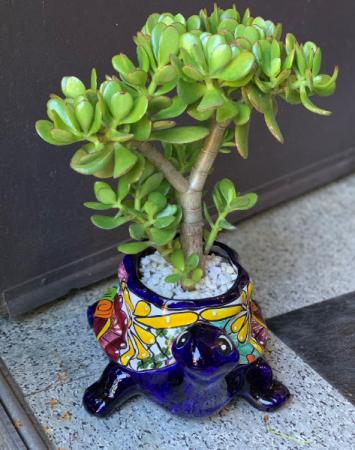 Turtle Succulent Arrangement Talavera Pot