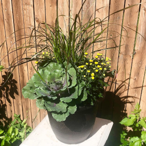 Tuscany Planter planter in Elyria, OH | PUFFER'S FLORAL SHOPPE, INC.