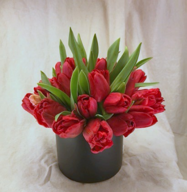 Tuxedo Tulips Vased Arrangement, Compact