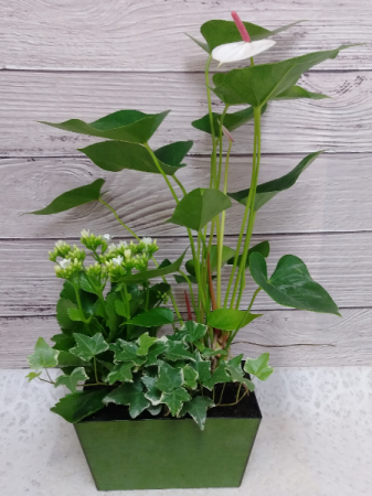Two Blooms Dish Garden