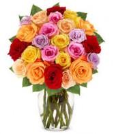24 MIXED ROSES Roses