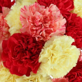 Two Dozen Carnation Special Bouquet