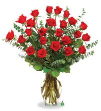 Two Dozen Long - Stemmed Red Roses
