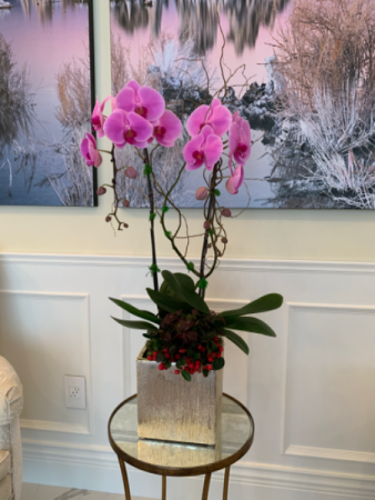 Two stem pink orchids