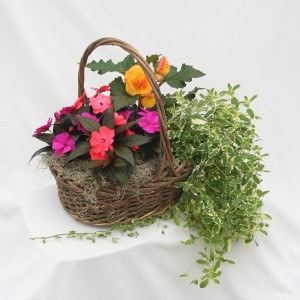 Tyler's Pick: Mixed Annual  Plant Basket