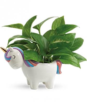 Unicorn Pothos Plant