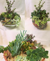 Unique Succulent Gardens Potted Plants
