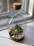 Upright Bottle Succulent Terrarium