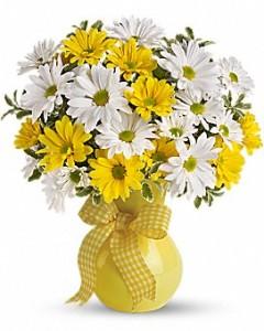 Upsy Daisy Birthday, Baby, Get Well, Everyday