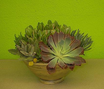 Urban Chic Succulent Plant