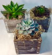 Urban Succulent Cube