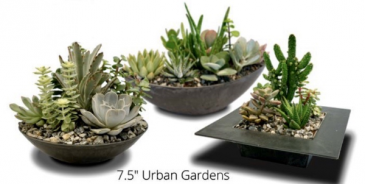 Urban Succulent Garden Succulent