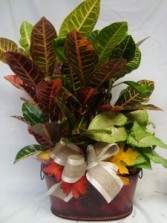 Plants in tin containers or baskets with real life life silk flowers seasonal look.