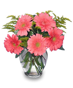 DAISY'S DELIGHT Pink Gerberas in Iowa City, IA | Every Bloomin' Thing