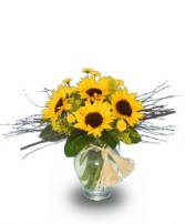 FRIENDLY SUNFLOWERS for Any Occasion