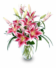 PURELY STARGAZERS Flower Vase in Nashville, TN | BLOOM FLOWERS & GIFTS