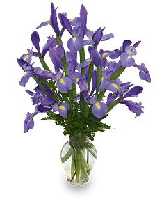 FLEUR-DE-LIS Iris Vase in Oakdale, CA   Oakdale Flowers