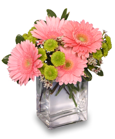 FRUIT SORBET Gerbera Bouquet in Riverside, CA | Willow Branch Florist of Riverside