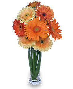 CITRUS COOLER Vase of Gerbera Daisies in Lisle, NY | Country Side Blossoms