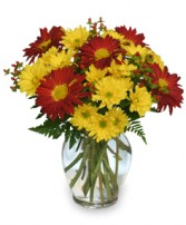 RED ROVER & YELLOW DAISY Bouquet of Flowers