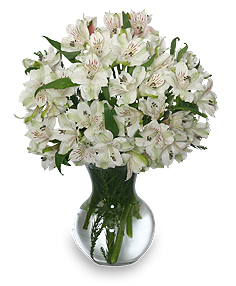 Fleecy white flower arrangement in belmond ia black dahlia fleecy white flower arrangement mightylinksfo