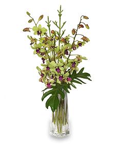 DIVINE DENDROBIUMS Vase of Orchids