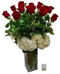 V-23 DOZEN RED PREMIUM ROSES, W/WHITE HYDRANGEAS