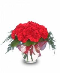 ELEGANT REDS Carnations