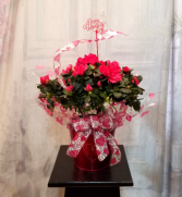 Valentine Azalea Blooming Plant