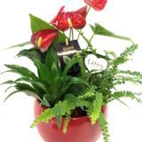 Valentine Bliss Plant Arrangement Dish Garden