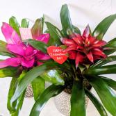 Valentine Bromeliad Custom