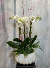 Valentine Orchid Deluxe