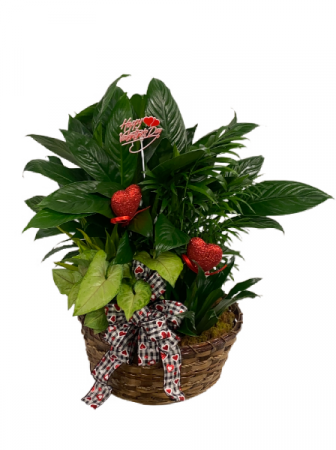 Valentine Planter Mixed Green Plants