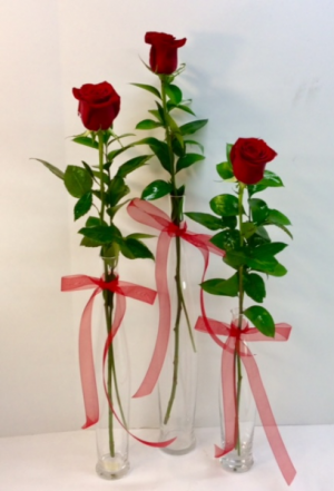 Rose Elegance Trio Other Color Roses Available! in Troy, MI | ACCENT FLORIST